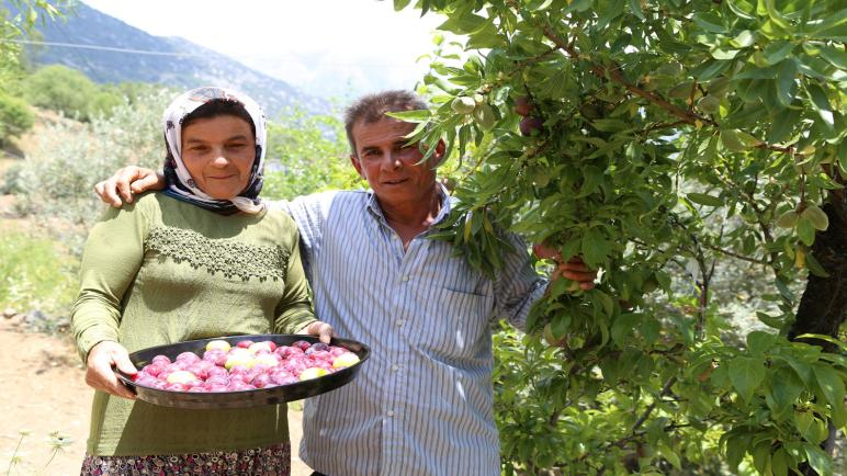 مزارع تركي يحصد 4 أنواع من الفواكه من شجرة واحدة وبدون سقاية!